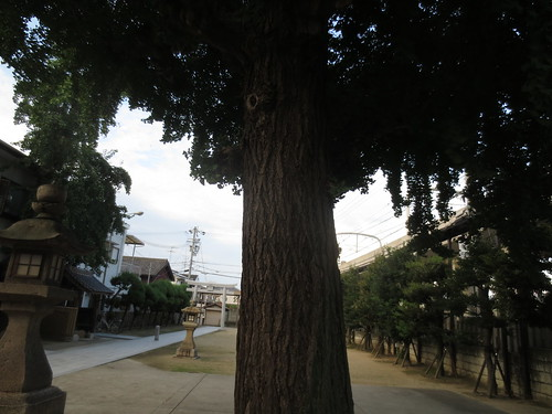 神社の大イチョウ