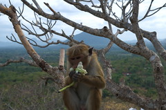 Monkey eating flower
