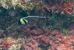 DSC_4213.jpg (d3_plus) Tags: sea sky fish beach japan scenery diving snorkeling  shizuoka   j1  izu  moorishidol    skindiving minamiizu      nikon1 hirizo   nakagi nikon1j1 1nikkor185mmf18  beachhirizo misakafishingport
