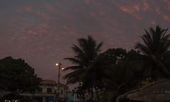 EXM 026 Noche tropical