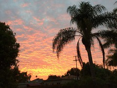 Bonita backyard (judemat) Tags: sunset sandiego palmtree