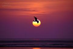 Special Sunrise (MaiGoede) Tags: sunrise golden nikon d800 wesermarsch butjadingen fedderwardersiel elitephotography nikond800 specialsunrise cmatthiasihriggoede