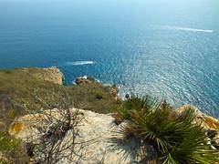 En  Cap D'Or - Vegetacion resistente - Palmitos (David.gv60) Tags: españa color marina mar spain mediterranean mediterraneo mare fujifilm acantilado vegetación resistente palmito moraira costablanca proyecto365 365dias sobrevolar capdor hs30exr