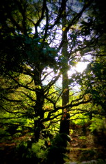 Trees and Bracken (galaxyrideruk) Tags: trees sussex bracken lomoish westlavington