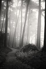 presidio path (eb78) Tags: sf sanfrancisco california ca blackandwhite bw monochrome grayscale presidio greyscale