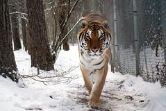 2014-01-29 Snow Roscoe (107)