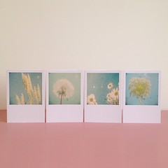 Blank Greetings Cards Set (_cassia_) Tags: flowers white art floral garden photography cream daisy etsy paleblue pampasgrass folksy dandelionclock palegreen ttv pastelcolours throughtheviewfinder flowercards vintagecameraphotography alliumflower naturecards cassiabeck blankgreetingscards greetingscardset
