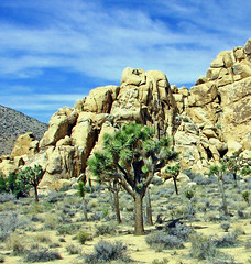 Joshua Tree National Park 4-13 (inkknife_2000 (7 million views +)) Tags: california usa landscapes rocks desert joshuatree skyandclouds joshuatreenationalpark rockpiles dgrahamphoto