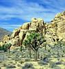 Joshua Tree National Park 4-13 (inkknife_2000 (8.5 million views +)) Tags: california usa landscapes rocks desert joshuatree skyandclouds joshuatreenationalpark rockpiles dgrahamphoto