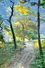 Lommel Kattenbos 092014 (eddy.vanransbeeck) Tags: licht natuur bos zon limburg kempen tegen lommel vreddy