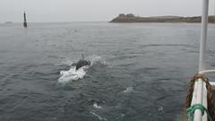 Arrivée sur l'île de Sein (vbernamont) Tags: brittany dolphin bretagne bateau sein dauphin finistère île îledesein