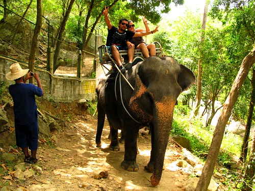 Paseando con Elefantes