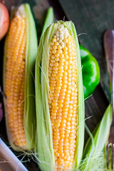 corn on the cob on a green wooden background, closeup (harmonyandtaste) Tags: summer food plant green nature field yellow closeup garden golden healthy corn holding hands raw hand natural sweet farm background grain harvest ears vegetable fresh health crop produce farmer organic agriculture cob maize sweetcorn kernels ripe corncob nutrition nutritious ingredient shuck