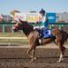 Alberta Breeders' Fall Classic 2014 - Horse Racing