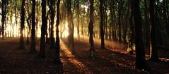 early morning woodland walking (skoly25) Tags: morning trees sunshine forest woodland walking early woods nikon d3100
