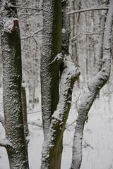 ckuchem-1630 (christine_kuchem) Tags: baumrinde buche bume eiche eis frost hainbuche natur pfad pflanzen ruhe samen spuren stille struktur wald weg wildpflanzen winter einsam kalt schnee ste