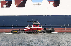 ERIC McALLISTER in New York, USA. August, 2016 (Tom Turner - SeaTeamImages / AirTeamImages) Tags: mcallister ericmcallister tug tugboat vessel water waterway channel kvk killvankull spot spotting tomturner statenisland newyork nyc bigapple unitedstates usa maritime marine port pony harbor harbour transport transportation red