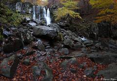 8mm-m1_2 (signori.stefano) Tags: canon70d samyang8mm foliage autunno
