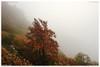 Autumn fall / Autunno (daril77) Tags: cengio montecengio cogollo veneto vicenza italia italy valdastico altipiano asiago canon eos eos7d 7d