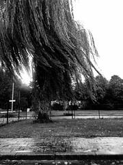 Onderweg (Pascal Heymans) Tags: auto fotokunst landschaft baumeln blackandwhite bw commuting enroute fairelanavette iphoneography landscape landschap onthego onderweg paisajes paysage pendelen photo photography porelcamino reis reizen road route scenery viajar weg zw zwartwit antwerpen belgi be pascalheymans