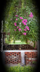 #garden of #hotel_clarks_shiraz_agra #clarks_shiraz_agra #india #uttarpradesh #agra #fatehabad #fatehabadroad  # # #__ # # # # (alrayes1977) Tags: garden hotelclarksshirazagra clarksshirazagra india uttarpradesh agra fatehabad fatehabadroad