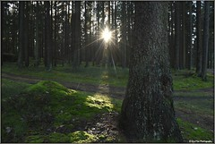 forest light (mayflower31) Tags: wald forest bume trees sonne sonnenstrahlen sunshine
