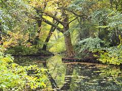 161027-0080 _Tiergart_SOOC3_ (Pixel-Cat) Tags: herbst autumn autumncolors herbstlaub herbstfarben stadtpark citypark wald forest water wasser berlin tierpark olympus omd em5 sooc mzuiko1250mm13563iiez