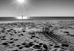 When the Stars Align (JDS Fine Art & Fashion Photography) Tags: sun beach light sand florida park statepark honeymoonisland