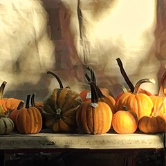 Sunday morning still life (Renee Rendler-Kaplan) Tags: pumpkins morning sunlight sundaymorningstilllife market farmersmarket logansquarefarmersmarket shadows chicagoillinois iphone iphoneography reneerendlerkaplan october 2016 display forsale priced gourds autumn fall outdoors outside booth logansquare consumerist chicagoist chicagoreader wbez table