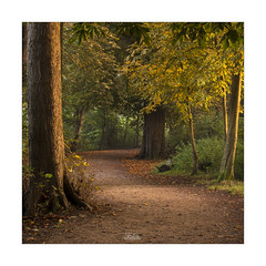 The Autumnal Path - Explored! (JRTurnerPhotography) Tags: jaketurner jrturnerphotography canon canon5dmarkiii canon70200mmf4lis telephoto canonlseries picture print image photo photograph photography photographer landscape landscapephotography lydiardpark lydiard swindon wiltshire england southwest westcountry uk unitedkingdom gb greatbritain britain british europe sunrise dawn sunlight sidelight autumn fall autumncolours trees pathway countrypark park squarecrop square october