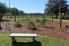 Georgia Visitor Information Center, grape arbors bench (MJRGoblin) Tags: lowndescounty 2016 lakepark georgia