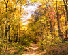 Caumsett Walk in the Woods (Diacritical) Tags: november62016 leicacameraag leicamtyp240 summiluxm11435asph f48 ¹⁄₁₂₅sec centerweightedaverage caumsettstatepark longisland newyork autumn trees