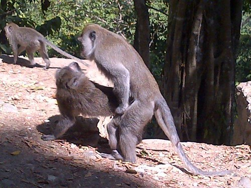 Monkey-Forest-Pusuk