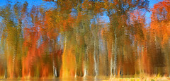 Fall Flames (chantsign) Tags: water reflection colorful displacement paintshoppro abstract distortions arty fall autumn watercolors