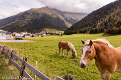 20160920_2081_Galtr (Rob_Boon) Tags: galtr montafon oostenrijk silvrettaalpenstrasse vorarlberg silvretta vermunt alps mountain austria robboon landscape