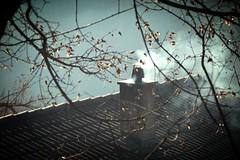 ça chauffe... (bulbocode909) Tags: valais suisse isérables toits cheminées fumée automne branches feuilles orange arbres