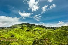 Tea Plantations (Nor Hidayat Hj.Mohamed) Tags: nice d700 nikon holidays cool mountain blue green asean asia malaysiatrulyasia malaysia pahang cameronhighland plantations tea