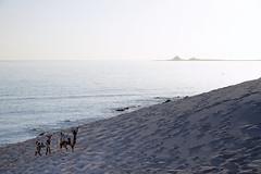 Socotra Goats (indomitablemachine) Tags: delicia beach dunes goat island sand sea socotra water yemen hadhramautgovernorate ye