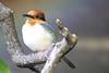 A very merry Christmas (Hedi-Alana) Tags: birds bird colour nature natures sitting colors beautiful beauty zoo houston houstonzoo
