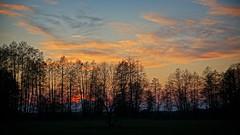 After sunset (pszcz9) Tags: polska poland przyroda nature natura pejzaż landscape drzewo tree chmury cloud beautifulearth wiosna spring sony a77