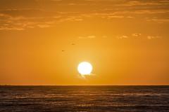 47/52 Just a sunrise (- Cajn de sastre -) Tags: amanecer sunrice sol sun mlaga andaluca costadelsol espaa spain naranja orange mar see mediterraneansea paz pace nikond500 nikkor70200mmf28gvrii 52in2016challenge 52weeksproject 52weeksofphotography lightsource fuentedeluz libertad freedom liberty felicidad happiness