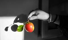 Autumn fruit [Explored 09-11-16] (Bon Espoir Photography) Tags: fruit apple autumn homegrown red leaf greenleaf hand holding wall motog4 mobilephone