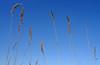 Prairie Grasses in Fall (drbensonjr) Tags: nature bakerwetlands