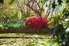 _MG_3673 (TobiasW.) Tags: spring frühling fruehling garden gardenflowers gartenblumen gärten garten blue mountains nsw australien australia backyard public