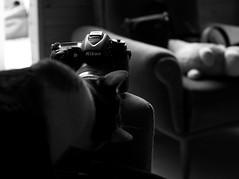 Nikon too (pepe amestoy) Tags: blackandwhite indoor cats elcampello spain fujifilm xe1 voigtländer color skopar 2535 leica m mount