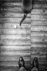 One cat's tail, one ball... & two feet !! (Vanvan_fr) Tags: noiretblanc bw nb blackandwhite cat chat animaldecompagnie balle ball queue tail parquet chaussures shoes pieds feet animalplanet vueenplonge birdseyeview france photo gr nogame