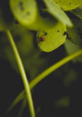 Ephemeral (John Walters vl) Tags: tone tones araa macro fotografia photography film pelicula forest nature spider explore naturephotography