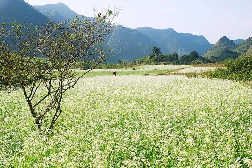 phuong-thao-jpg-6185-1415261906