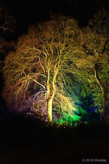DSC04214 (Twareg) Tags: 2016 aboretum bpw enchanted forest westonbirt bathphotowalk gloucestershire england