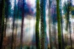 Damn Ed, I think the aliens have just landed ... (yarin.asanth) Tags: landing morning wood yarinasanth gerdkozik beam sun rays green trees alien light forest